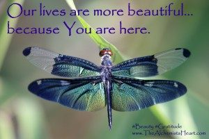Beautiful-Dragonfly-300x200