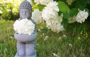 buddha-753016_640-300x189