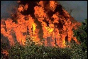 wildfire-300x200